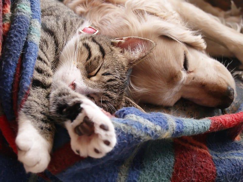 Если дома две кошки сколько лотков нужно