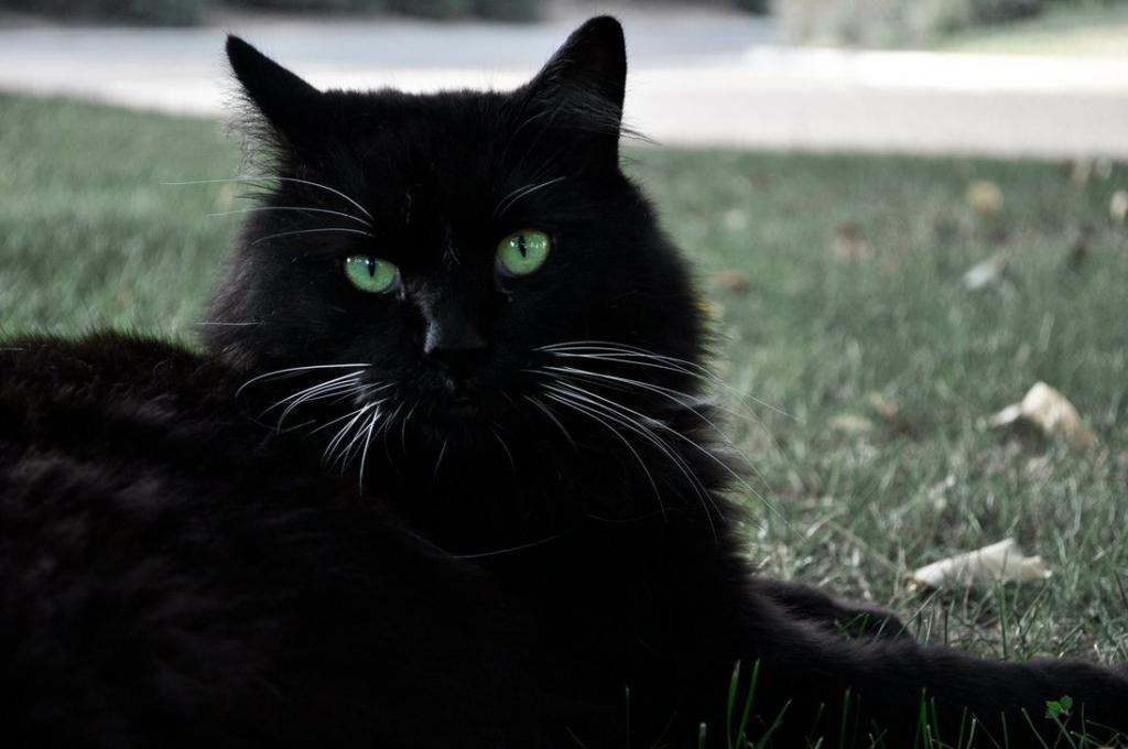 Зеленоглазые черные коты