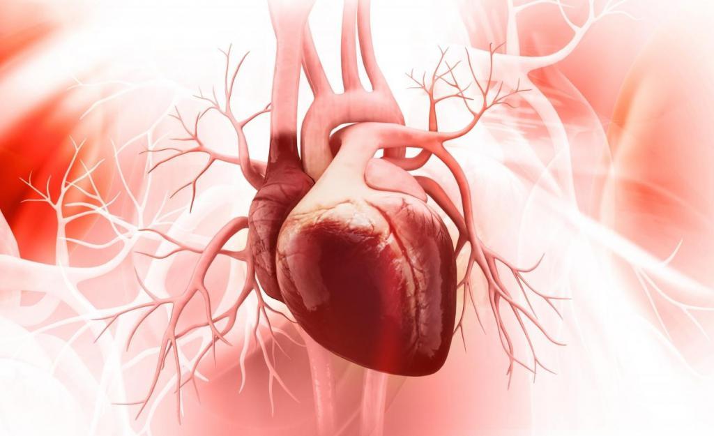 Фиброз сердца - что это такое?