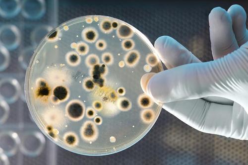 бактериальный посев