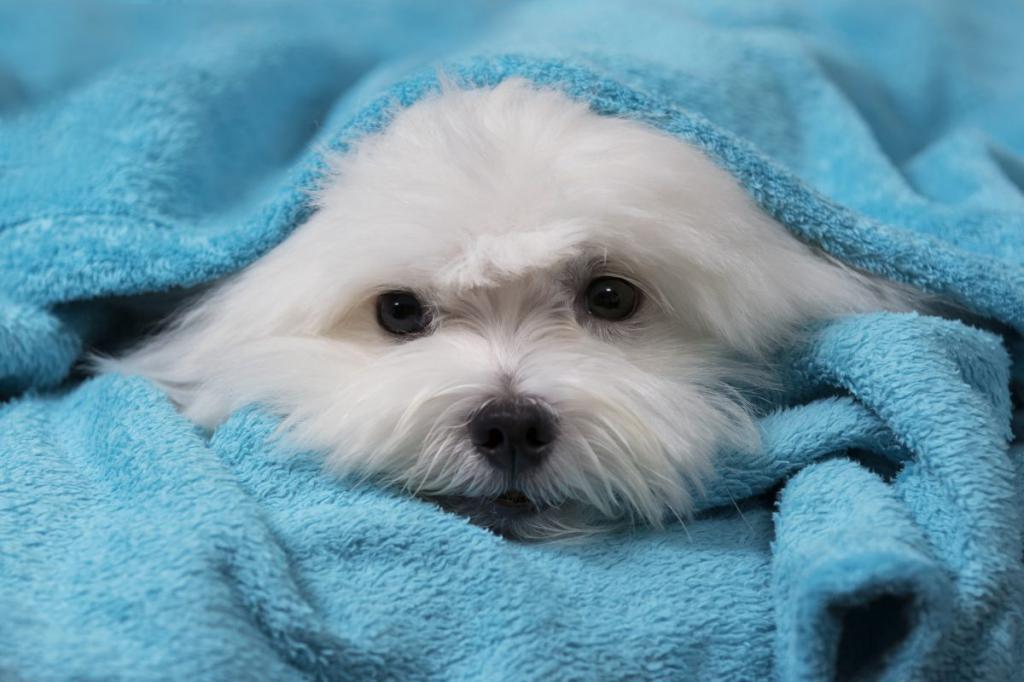 Передается ли простуда собакам thumbnail