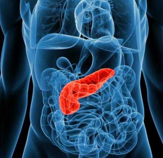 какие витамины поджелудочная железа