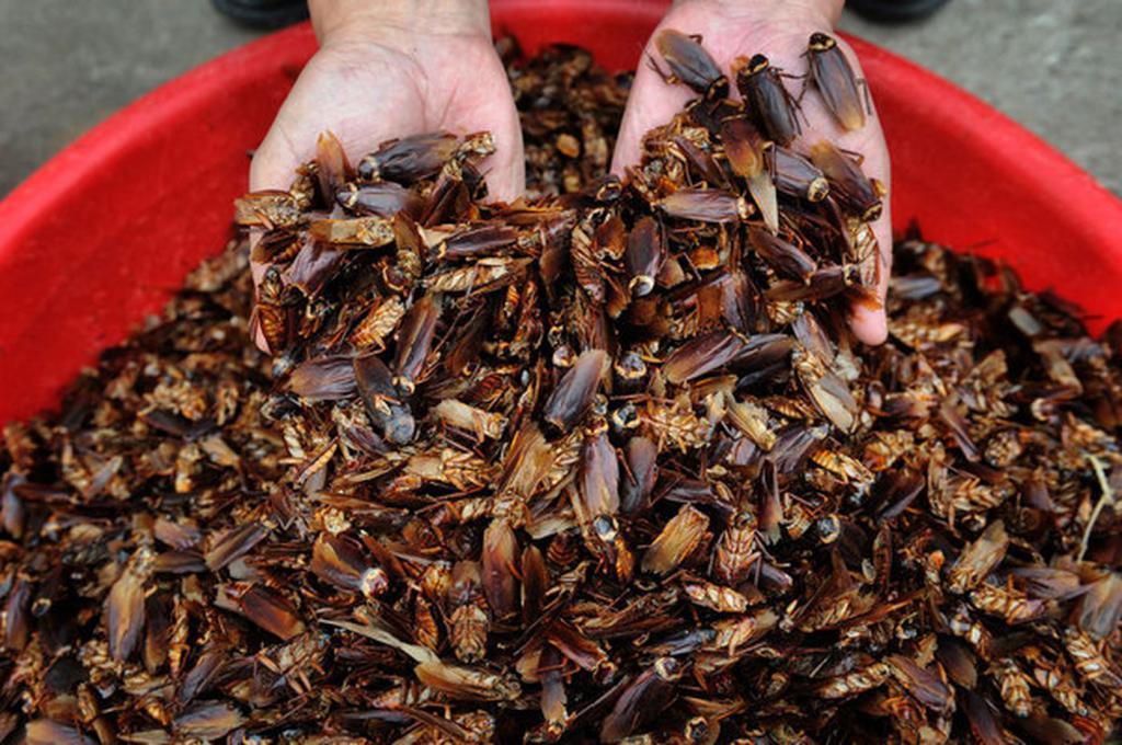 сколько лапок у тараканов
