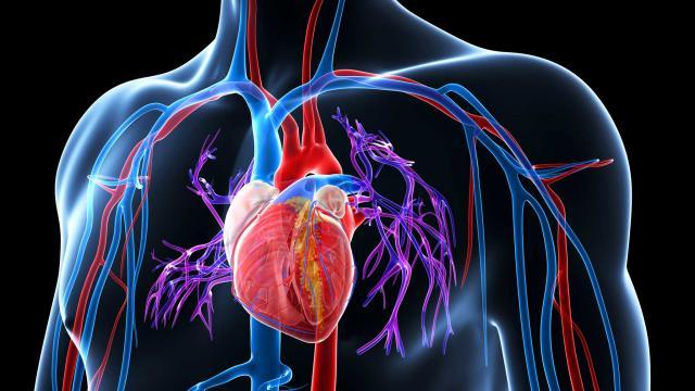 Проблема с кровеносными сосудами