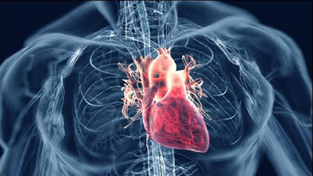 лечит нервы и сердце