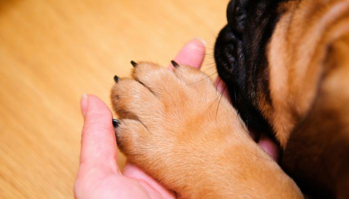 как остановить кровь у собаки из ногтя