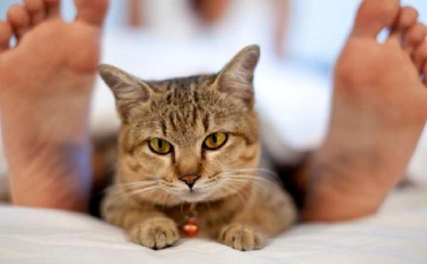 Почему кошка лижет ноги хозяина