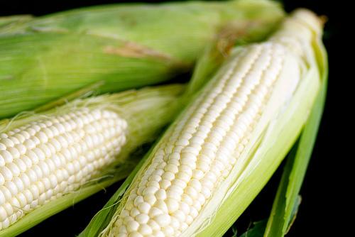 Молодая кукуруза.