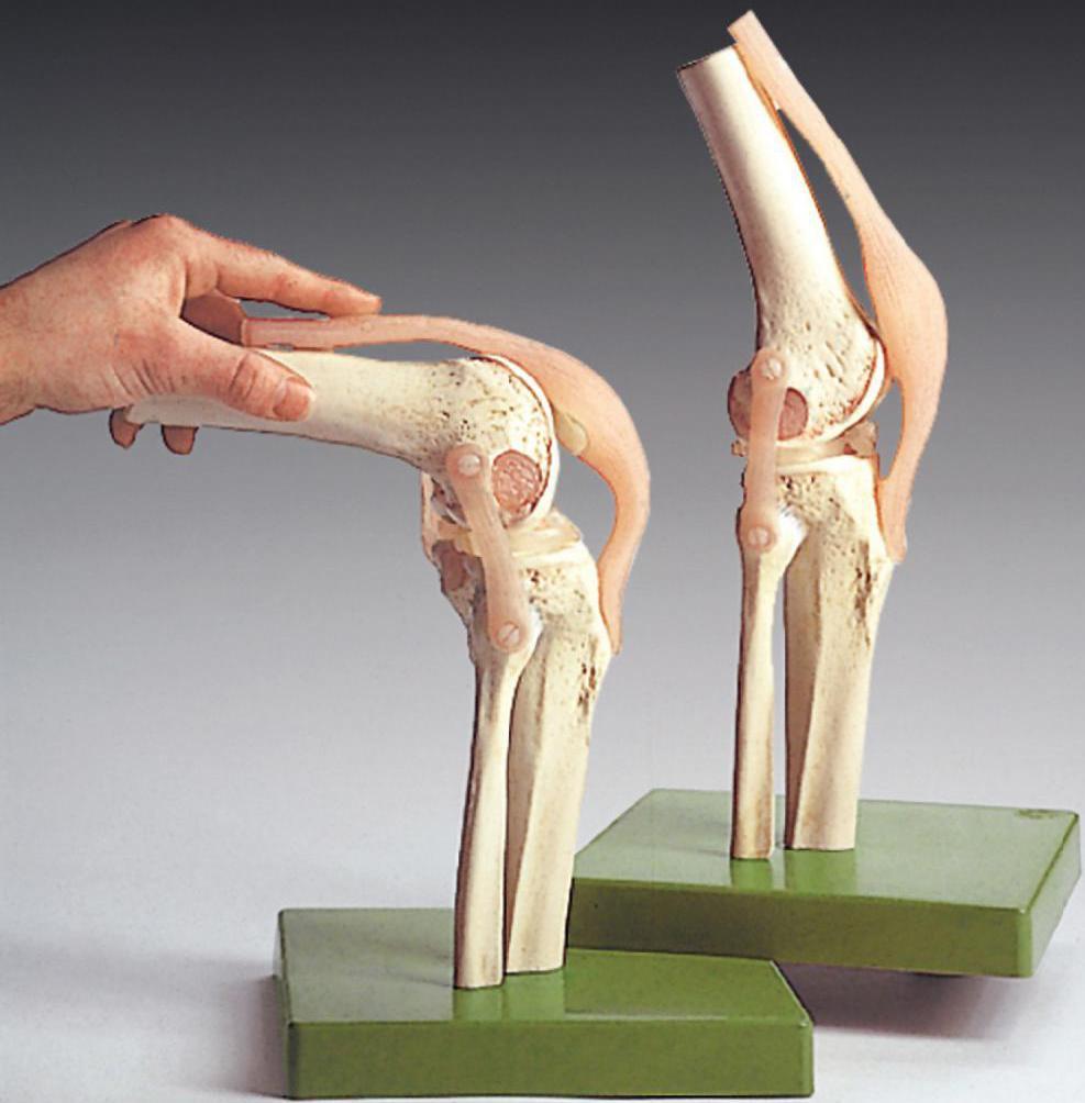 болит нога сзади выше колена