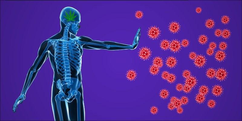 Антиядерные антитела положительный