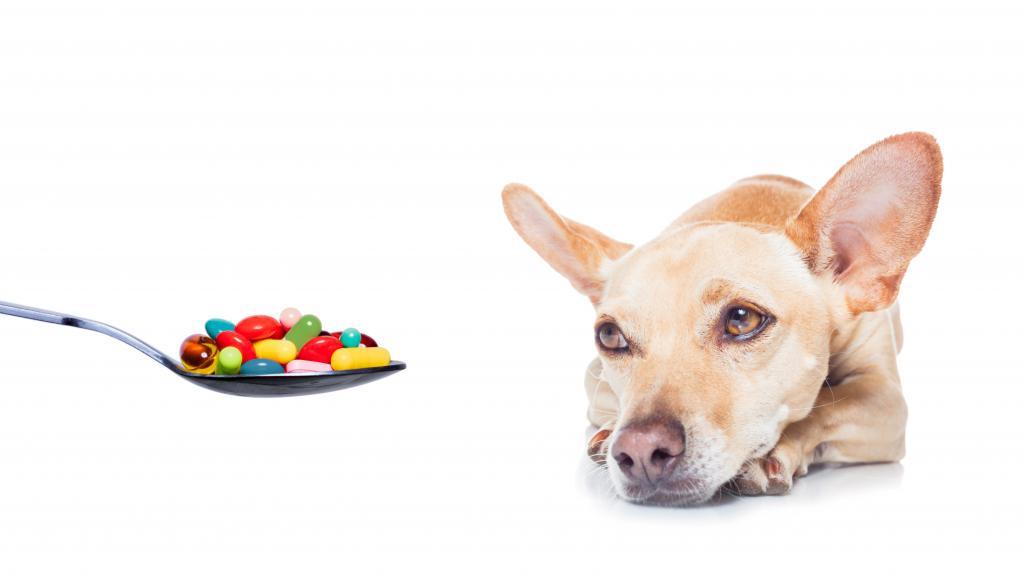 цирроз печени у собак симптомы и лечение