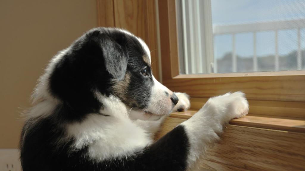 собака воет одна дома