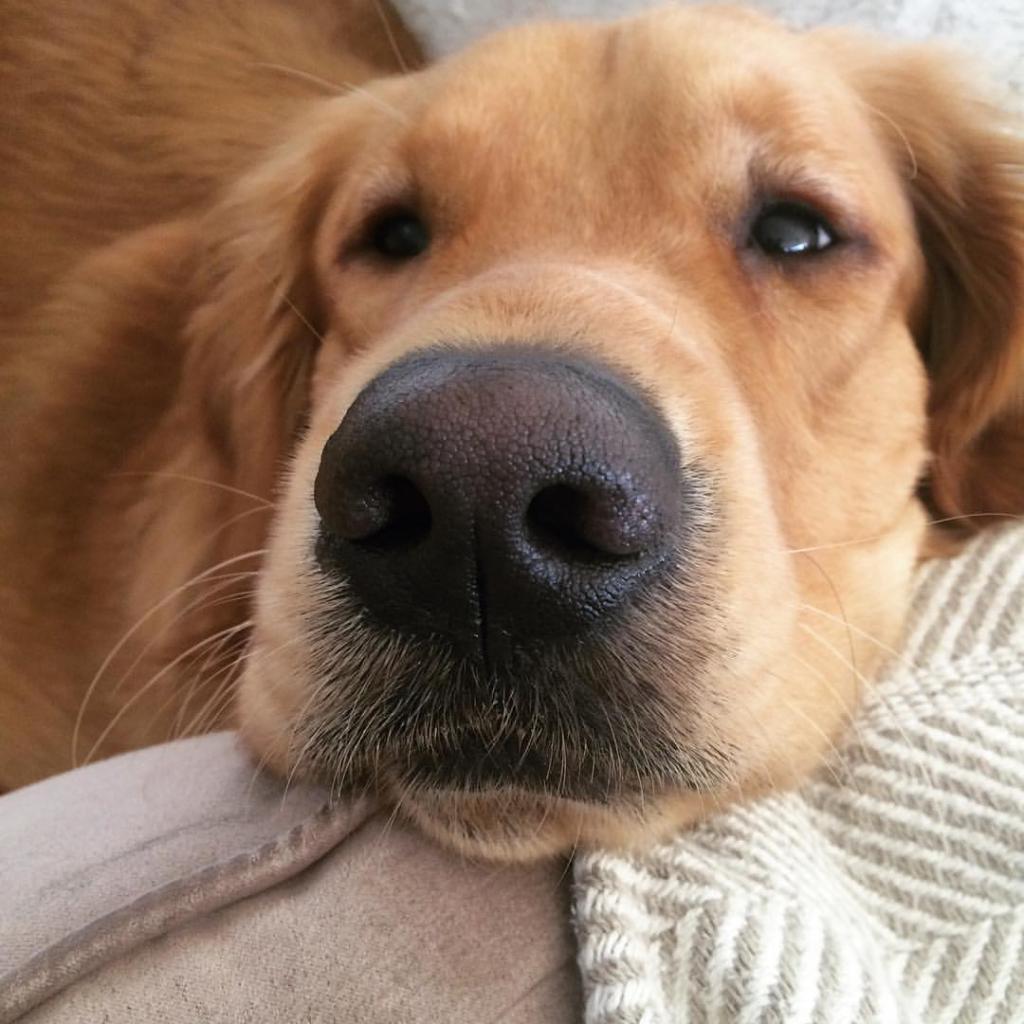 Горячий нос у собаки что значит