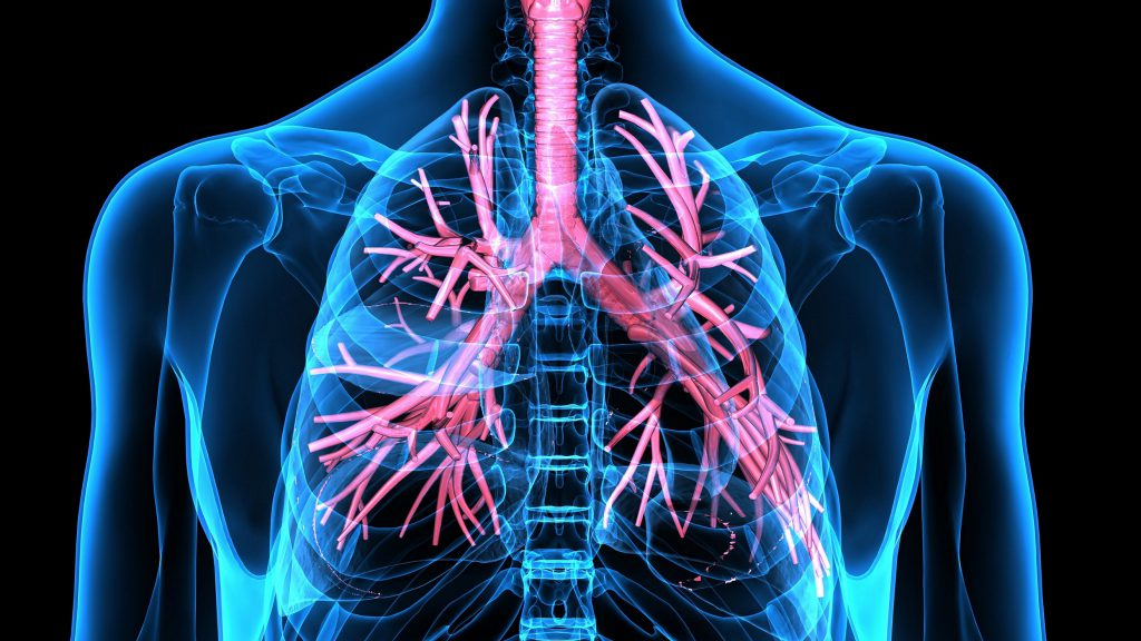 Артерии в легких