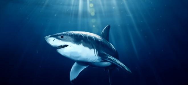 живая акула