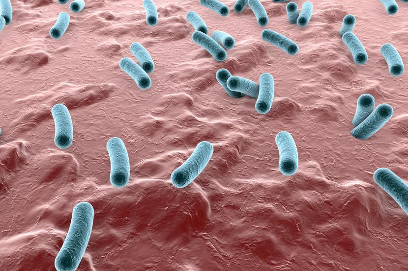 Бактерия шигелла