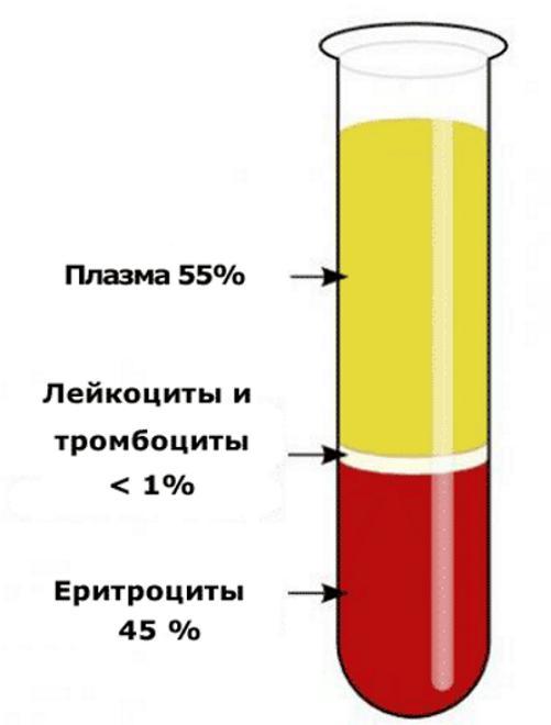 Реакция оседания эритроцитов