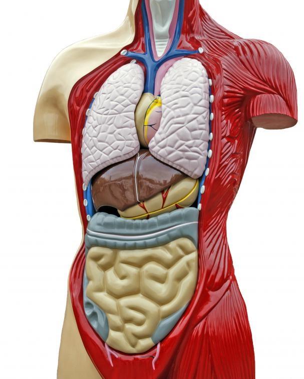 асцит брюшной полости причины возникновения у людей