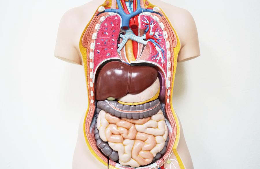 Дифференциальная диагностика вирусных гепатитов