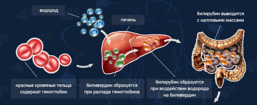 норма билирубина в крови