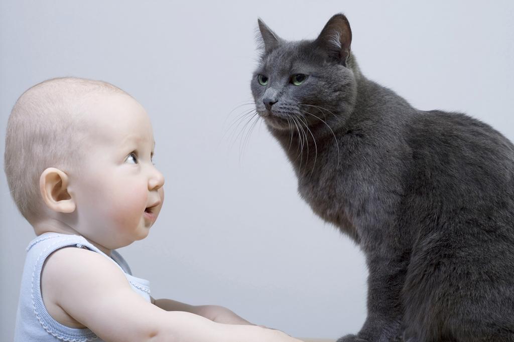 Стригущий лишай передается от кошек