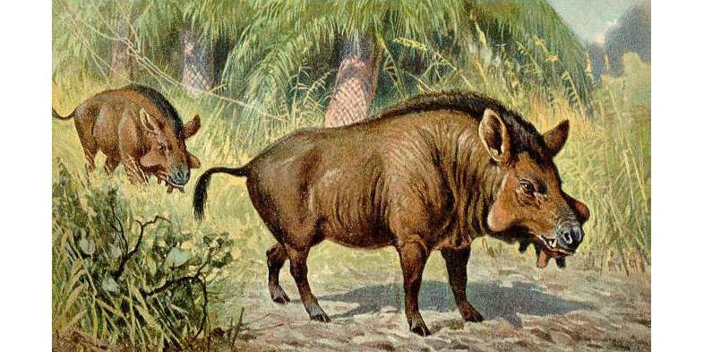 древние предки свиньи