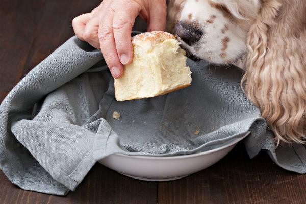можно ли давать собаке белый хлеб
