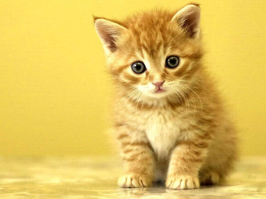 Маленькая грыжа у котенка thumbnail
