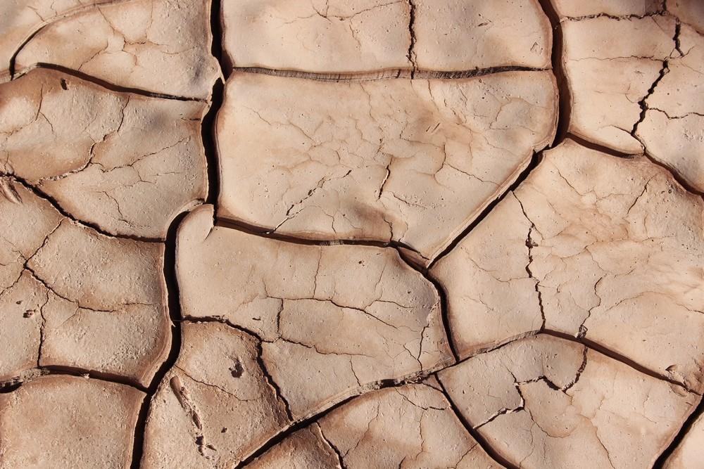 сухие пятна на коже шелушатся диагностика