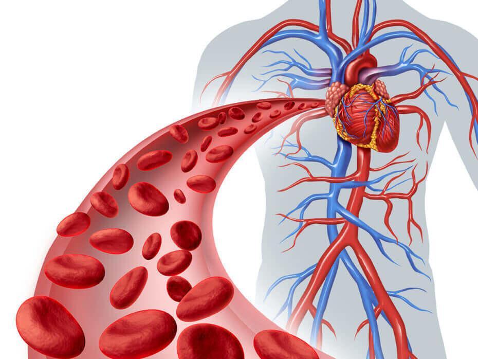 Почему понижен гемоглобин в крови у мужчин?