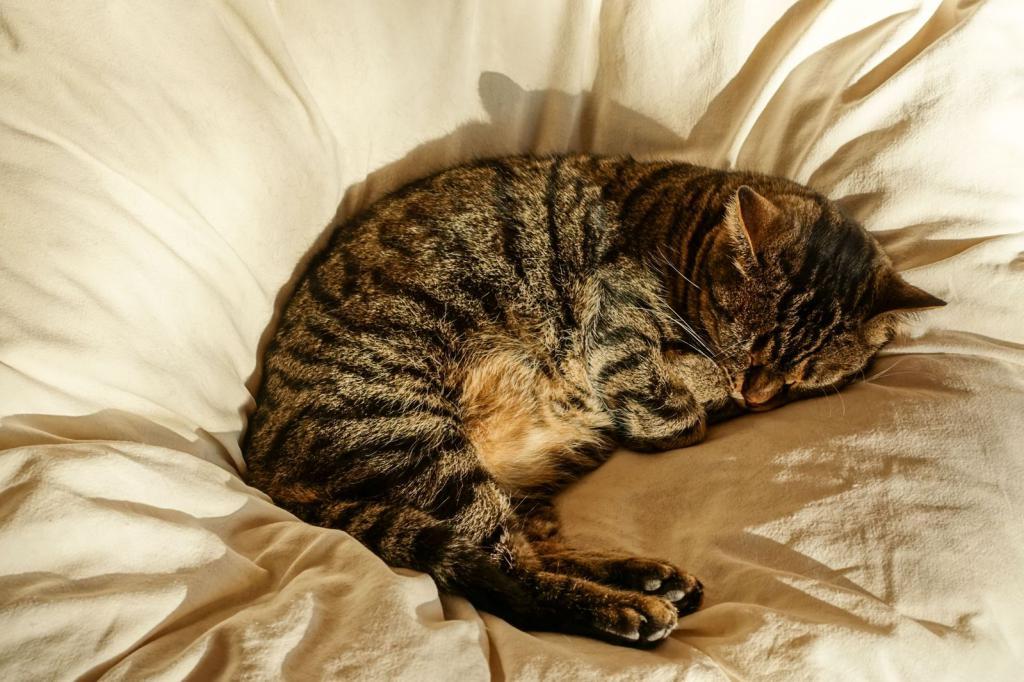 Спящая на перине кошка