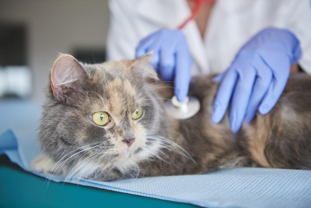 Кошка в клинике