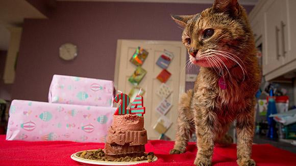 Коты долгожители рекорды