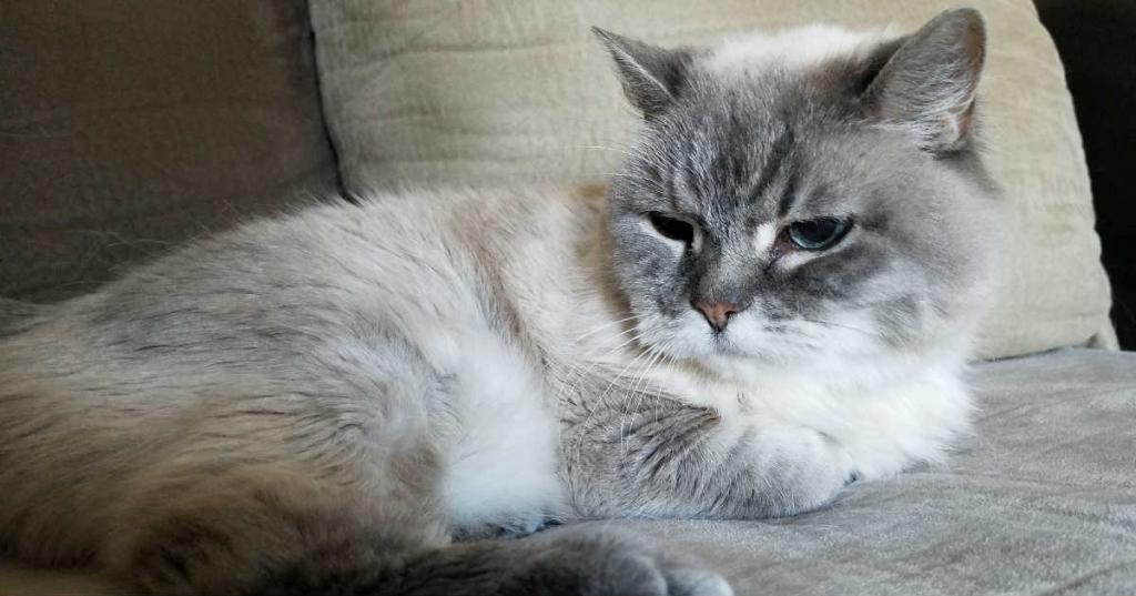 Рекорды Гиннеса котов долгожителей