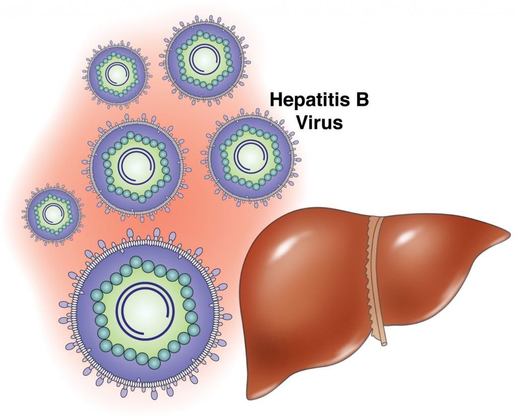 влияние гепатита в на печень