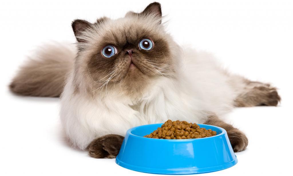 Подходит для всех кошек