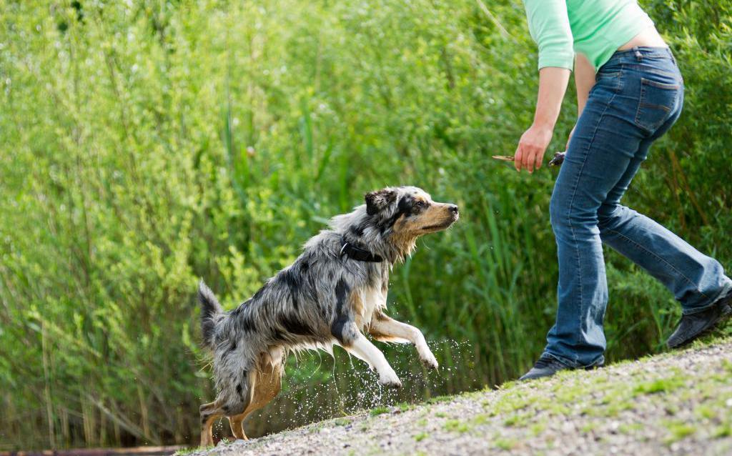 Убегаем от собаки