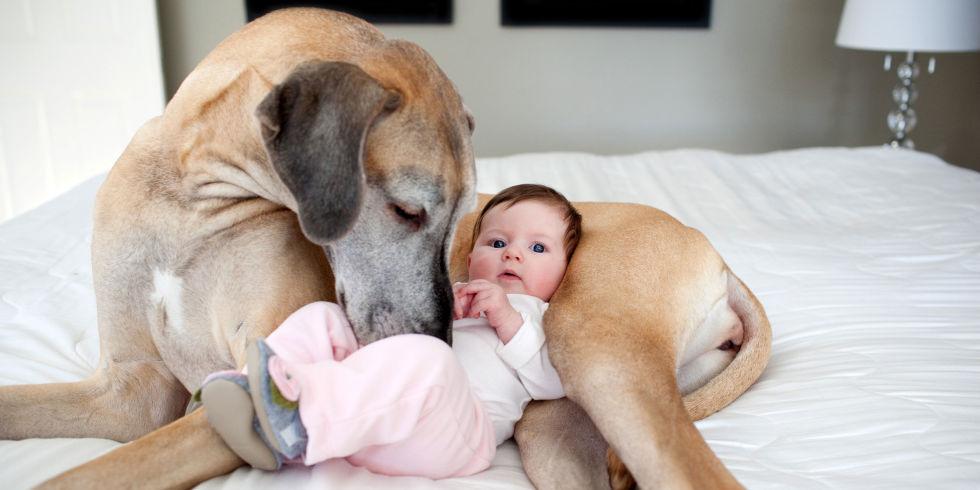 Аллергия на животных у новорожденного