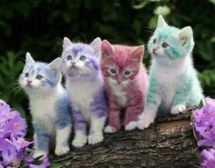 Котята разноцветные
