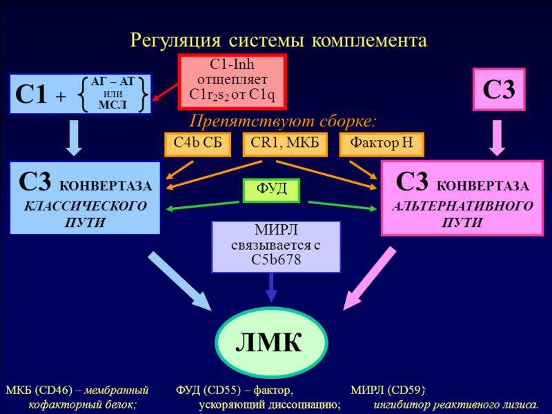 регуляторные белки системы комплемента