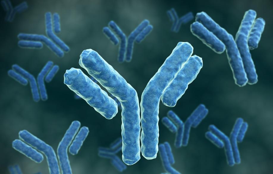 Так выглядят наши антитела