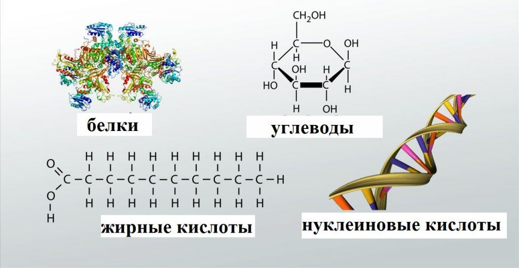 Органические молекулы