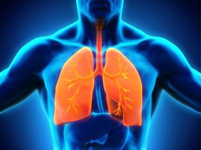 Дыхательная система одна из важнейших в человеческом организме