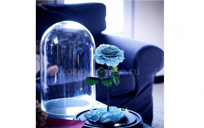 роза в колбе цена