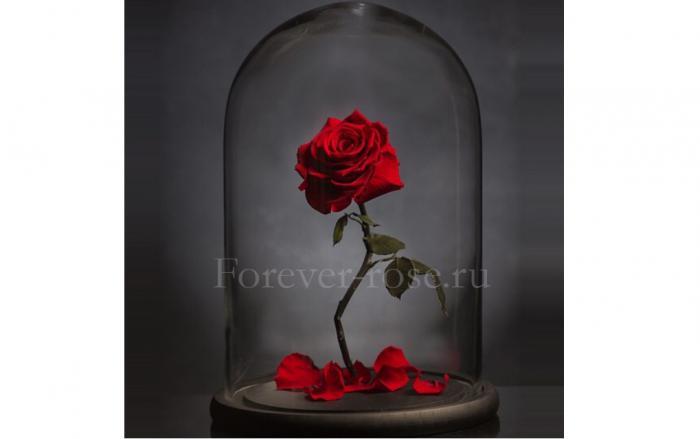 роза в колбе купить в москве