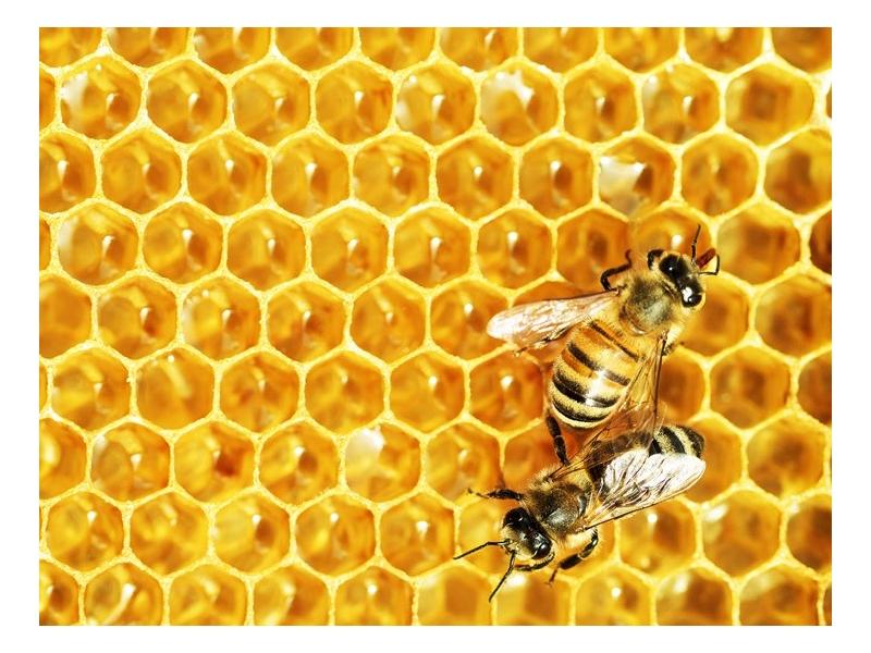 Как быстро растворяется мед в воде
