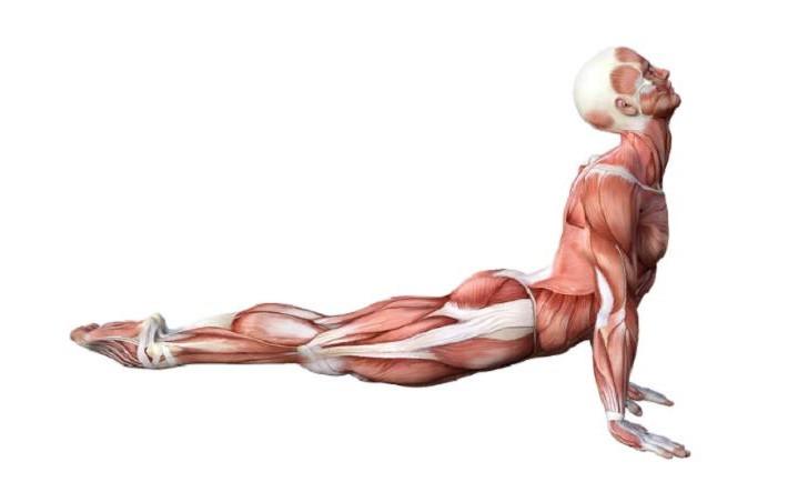 10 упражнений, которые помогут вам стать невероятно гибким