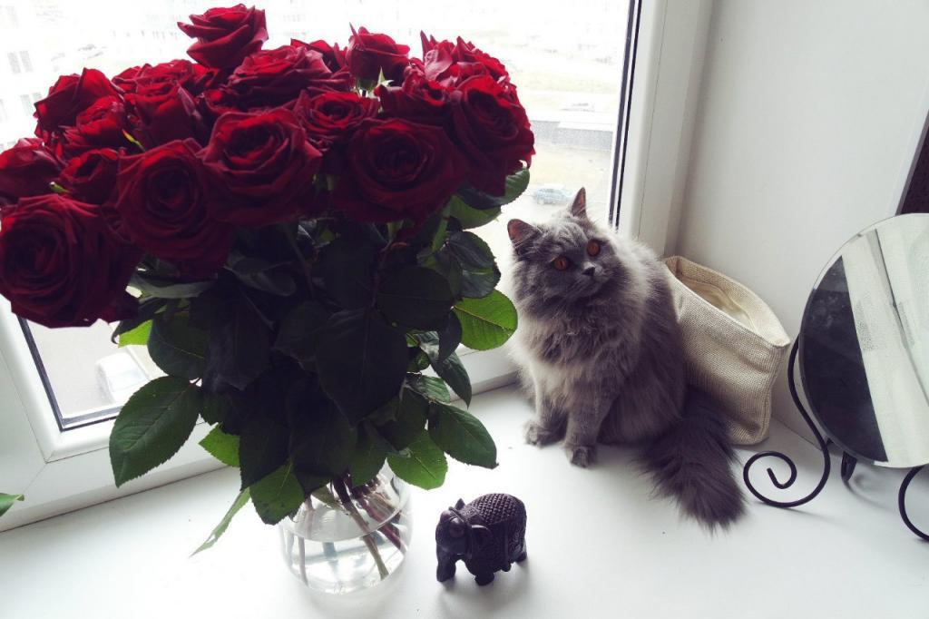 Букеты цветов на столе на подоконнике на полу дома