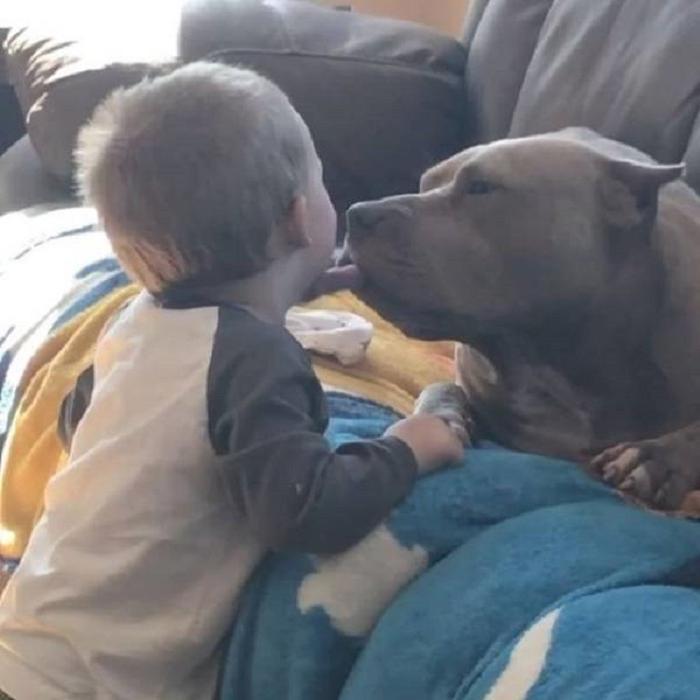 Отец фотографирует маленького сына с собакой, чтобы показать, что питбули не такие страшные, как о них говорят