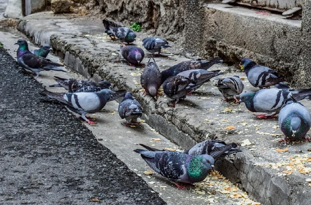 Голуби свили гнездо на балконе — примета к счастью